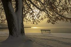 Golden Snowfall (Matt Champlin) Tags: november snow snowfall snowy snowing life nature outdoors skaneateles lake flx fingerlakes morning sunrise winter cold chilly arctic landscape canon 2019