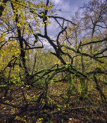 Old fellow (Gergő Kardos) Tags: enjoyingnature havesomefun walk leafs silence colorful forest photography old branches nopeople autumn nature tree