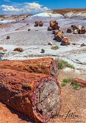 Petrified Logs (Where The Trails Take You Photography) Tags: jasper petrified wood log logs red colorful nationalpark petrifiedforest arizona travel landscape canon wherethetrailstakeyou 5dsr 2470 2470mm summer july