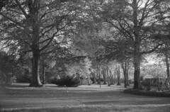 Photo of Moody Autumn Crichton Gardens
