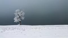 Зима #ural,  #пейзажи, #природа, #панорама, #красота, #холмы, #натура, #восход, #осень, #горы, #люблюфото, #Урал, #березки, #Магнитогорск, #снега, #южныйурал, #photorussia, #etonashural, #uralinsta, #foto_ural, #russ_beauty, #natureofrussia, #natureofruss (ЛеонидМаксименко) Tags: natureofrussia красота осень люблюфото горы природа березки красиваяроссия яфотограф снега пейзажи восход natureofrussiaru uralinsta панорама кенон etonashural southural russbeauty магнитогорск зима photorussia fotoural натура холмы урал пейзажироссии южныйурал ural