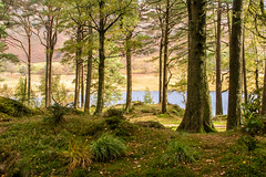 Magical view through the trees (Keith now in Wiltshire) Tags: landscape view vista bleatarn lake water tree woodland forest langdales mountain trunk foliage lakedistrict nationalpark cumbria hdr nationaltrust