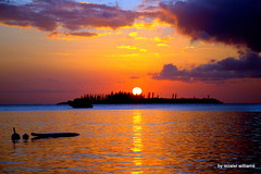 Pacific Sunset Timeline IMG_5760 (iezalel7williams) Tags: sunset sky sea seawater silhouette sun silhouettes seascape photo beautiful clouds reflection water beauty blue photography paradise pinetrees purple orange pink yellow pacific peace planetearth high light love landscape lovely outdoor rock energy vibration scenary view happylife holidays thinkpositive thankyou newcaledonia nature canoneos700d nice naturalplace peaceful
