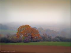 Herbstlandschaft - autumn landscape (Jorbasa) Tags: jorbasa hessen wetterau germany deutschland nebel landschaft landscape fog baum tree autumn herbst wiese meadow acker region wald forest