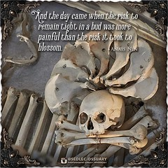 """""""And the day came when the risk to remain tight in a bud was more painful than the risk it took to blossom."""" - Anais Nin . 💀 Sign up on our mailing list for exciting special announcements! 💀 ☩ sedlecossuary.mechanicalwhispers.com ☩ ☩ Or click (Sedlec Ossuary Project) Tags: sedlecossuaryproject sedlec ossuary project sedlecossuary kostnice kutnahora kutna hora prague czechrepublic czech republic czechia churchofbones church bones skeleton skulls humanbones human mementomori memento mori creepy travel macabre death dark historical architecture historicpreservation historic preservation landmark explore unusual mechanicalwhispers mechanical whispers instagram ifttt"""