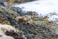 Feed me mum! Mother otter feeding its cub. (ejwwest) Tags: