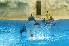 Teneriffa 1988 (claudia.schillinger) Tags: canaryislands loroparque puntabrava spain teneriffa island dolphin
