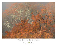 The Color Of Autumn (DKNC) Tags: roughridge blueridgeparkway northcarolina nc autumn fall leaves trees orange daleking