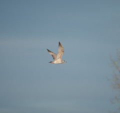 Afternoon walk (Gary Durrant) Tags: birds nature outside canon 1d