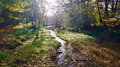 River Bulbourne in Autumn (Davoski) Tags: autumn water river beck stream riverbulbourne light trees sparkle berkhamsted hertfordshire chilterns