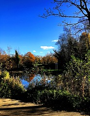 Another walk in the park (BrooksieC) Tags: pond river lake trees autumn sky blue gold brown ireland northernireland belfast victoriapark path park