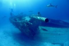 Wreck (michel David photography) Tags: wreck épave bahamas shark requin