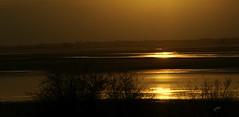 Le Lac du Der nimbé d'or (Nathery Reflets) Tags: eau lac soleilcouchant paysage nature coucherdesoleil lacduder champagne soleil ciel marne hautemarne grandest perthois