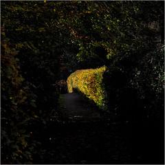 Day 317 Pool of light (Dominic@Caterham) Tags: light hedge bush trees