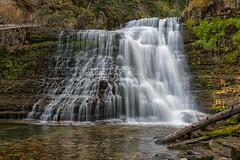Ousel Falls (Phil's Pixels) Tags: waterouzel waterdipper bird waterfall falls bigsky montana southforkwestforkgallitinriver