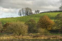 Sheepish (Tony Tooth) Tags: nikon d600 sigma 50500mm countryside hillside landscape november england marsh rudyard staffs staffordshire