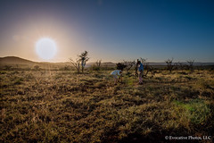 Sundown in South African Bush (Evocative Photos) Tags: africa zulu landscape eerie nature brush exploration quiet bush bluesky gamepreserve trees mountains adventure southafrica safari travel nightapproaches tourists mountainsindistance dusk still sundown horizontal places men