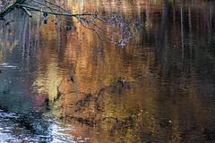River Reflections (jillyspoon) Tags: autumn autumncolours autumnal river rivernidd northyorkshire harrogate reflections treereflections hues colours colourful orange trees foliage treetrunks bilton niddgorge branches