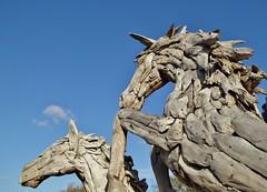 Photo of Wild & Woody Horses