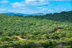 Photo of the Treetops  of Zululand in South Africa (Evocative Photos) Tags: africa path safari nature mountains zululand background royaltyfree greentrees travel forest journey treetops jungle naturesbeauty southafrica places bush