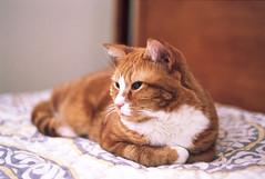 Mikey (Kodak Portra 800 rated at 640) (Will Kimeria) Tags: cat film portra portra800 kodak