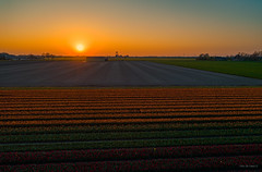 It was time to settle down for the Sun. (Alex-de-Haas) Tags: dji dutch europa europe fc6310 holland nederland nederlands netherlands noordholland p4p phantom phantom4 phantom4pro aerial aerialphotography agriculture akkerbouw beautiful beauty bloemen bloemenvelden boerenland bollenvelden bulbfields farmland farming flowerfields flowers landbouw landscape landscapephotography landschaft landschap landschapsfotografie lente lucht luchtfotografie mooi polder pracht quadcopter schoonheid skies sky spring sundown sunset tulip tulips tulp tulpen zonsondergang warmenhuizen northholland