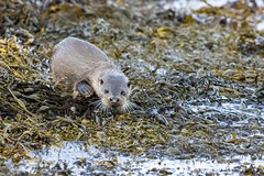 Mother and cub otters (ejwwest) Tags: