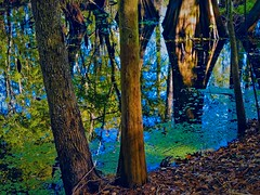 Layered (surfcaster9) Tags: oaktrees water reflections ground cypresstrees marsh leaves lumixg7 lumix25mmf17asph outside nature florida outdoors