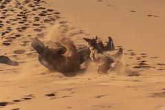 _DSG0369 (Jesús Carmona) Tags: arena desierto duna perro persona peopleandpets smileonsaturday