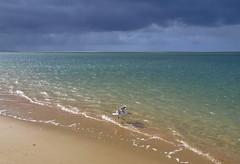 Sabor (Jam Faz) Tags: paz bj praia te pecado sin sabor flavour seagull gaivot céu dorian gray oscar wilde troia