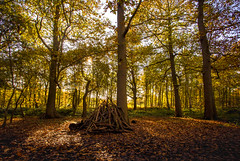 Fire wood (Steve M Photography) Tags: richmondpark autumn trees colour branches wood leaves parkland countryside rural nature outdoors landscape shadows light forest england