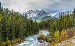 River view, Canadian Rockies (Photosuze) Tags: rivers jaspernationalpark mountains snow fall autumn trees pines clouds sky landscape canada canadianrockies