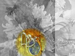 Thank You (soniaadammurray - On & Off) Tags: flowers nature selectivecolours shadows reflections artchallenge artweekgallerygroup ~~~selectivecolors~~~ chrysanthemum ribbon netting charms text thankyou digitalart art myart visualart abstractart experimentalart contemporaryart picmonkey photoshop