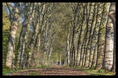 Into the forest (frankvanroon) Tags: forest trees tree autumn autumncolours run walk vlaardingen broekpolder nature woodland landscape fall