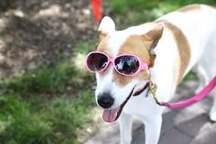 IMG_1187 (i_am_lee_sam) Tags: 2019 geneva concours delegance il car auto show cute dog doggles