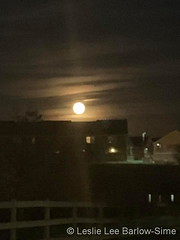 November 12, 2019 - A rising beaver moon. (Leslie Lee Barlow-Sime)