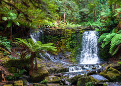 Waterfall in Tasmanian Rain Forest (Evocative Photos) Tags: vegetation moss foliage converge plants nature australia fresh travelphotography magical horizontal lush scenerytraveldestination clean woods trees verdant rainforest park hobart naturalbeauty forest scenic nationalpark outdoors environment tasmania eucalyptus places green