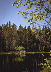 tranquil smile (hyperboreas) Tags: trees forest woods evergreen pines birch woodland lake pond bluesky nordic summer suomi finland scandinavia europe boreal