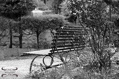 Il momento ideale per rilassarsi... (priolo_immagine_creations) Tags: parkbench fence bench tree treetrunk baretree park wood frost autumn season footpath trees green outdoors beautiful light grass white beauty blackandwhite agrigento relax excursion iron composition panchina alberi villa parco