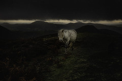 Light in the dark (Images from the Dark Side) Tags: horse white shropshire long mynd sleet rain dark side hills storm stormy pony wild morning clouds