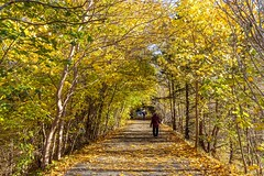 Autumn Stroll (Karen_Chappell) Tags: bowringpark park autumn fall trees path road trail pathway nature outdoors nfld newfoundland stjohns canada canonef24105mmf4lisusm atlanticcanada avalonpeninsula people november yellow green leaves walking maple scenery scenic landscape