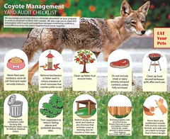 Climate Change Coyote – Eat Your Pets (ramalama_22) Tags: coyote pet you eat change climate crisis hysteria marie dinner song nick save winner planet doggy carbon footprint lowe provost dioxide bird feeder meat true up death police story horror vomit throwing