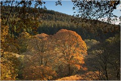 Autumn at Powerscourt Waterfall (Kevin_Barrett_) Tags: ireland wicklow powerscourt waterfall trees autumn forrest fall colours leaves woods landscape scenic scenery serene