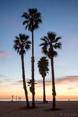 DSC_0092 (Kevin Kasmai) Tags: usa california la los angeles beach sun fun sand sport outdoors water pier surf skate palm travel destination tourist tourism nikon photography