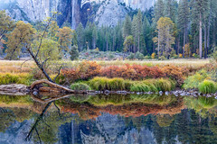 Valley Reflections (Kirk Lougheed) Tags: bridalveil bridalveilfalls california gatesofthevalley mercedriver usa unitedstates valleyview yosemite yosemitenationalpark yosemitevalley autumn carexnudata fall forest landscape moraine nationalpark outdoor park plant reflection river torrentsedge water waterfall