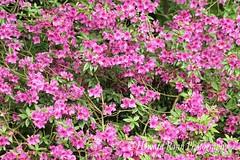 Fellows Riverside Gardens (67) (Framemaker 2014) Tags: fellows riverside gardens mill creek park youngstown ohio northeast united states america