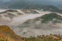 _J5K3781.0311.San Sả Hồ.Sapa.Lào Cai (hoanglongphoto) Tags: asia asian vietnam northvietnam northwestvietnam northernvietnam landscape scenery vietnamlandscape vietnamscenery sapalandscape nature morning mountain flanksmountain clouds spring canon canoneos1dsmarkiii tâybắc làocai sapa mùaxuân phongcảnh phongcảnhsapa thiênnhiên núi dãynúi sườnnúi mây mâysapa sapasclouds canonef2470mmf28lusm