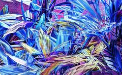 blue impression (albyn.davis) Tags: abstract art color colorful blue vivid vibrant bright nature plants garden manipulation composite artistic fabuleuse