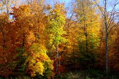 Der Wald (ivlys) Tags: darmstadt steinbrückerteich wald forest teich pond herbst autumn bunt colourful spiegelbild mirrorimage landschaft landscape natur nature ivlys