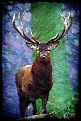 IMGL5064 Red Deer (SØS'Art) Tags: animal digiart digitalartwork art kunstnerisk manipulation solveigøsterøschrøder artistic eyes filterforge nature painting photomanipulation photoshop reddeer studioartist 100views